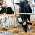 210904-Foire.agricole-014